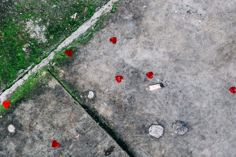 High angle view of red flowers