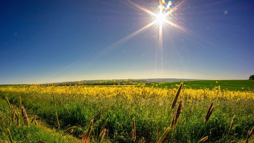 Landscape Sky Beauty In Nature Field Agriculture Tranquility Plant Yellow Blue Nature