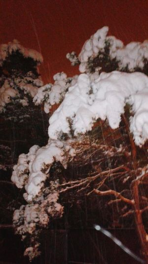 Check This Out Cauliflower? Or Snow?