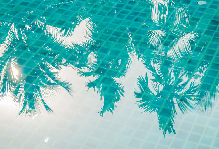 High Angle View Of Trees Reflecting On Swimming Pool