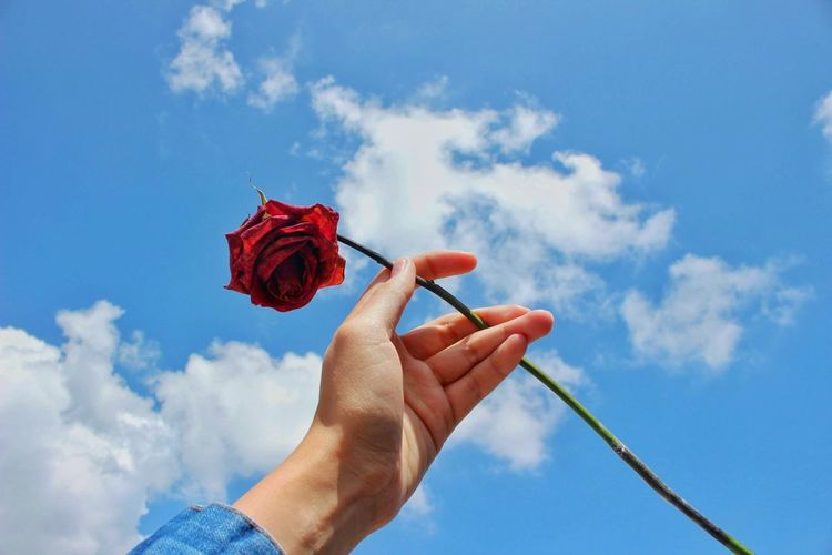 Low angle view of hand holding red rose against sky