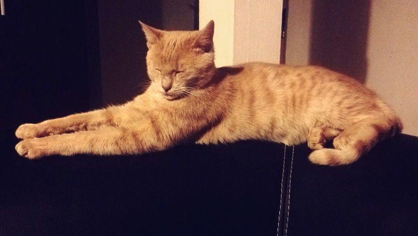 Cat♡ Pookie  Miss