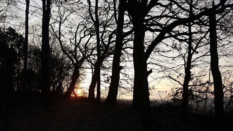 silhouette of trees View Scenics EyeEm EyeEmNewHere EyeEm Best Shots Beautiful Calmness Calmness Of Nature Ambiance Liveauthentic colour of life Beauty In Nature Tree Tree Area Silhouette Branch Sunset Sky WoodLand Forest Tranquil Scene Tree Trunk Tranquility Calm Growing Tree Canopy  Woods