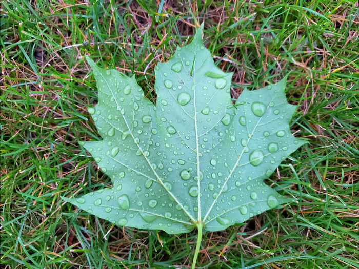 High angle view of raindrops on leaf