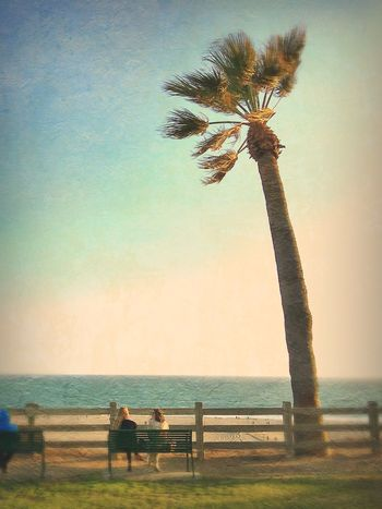 Untitled SoCal Nature Palm Trees Outdoors California Santa Monica Pacific Ocean