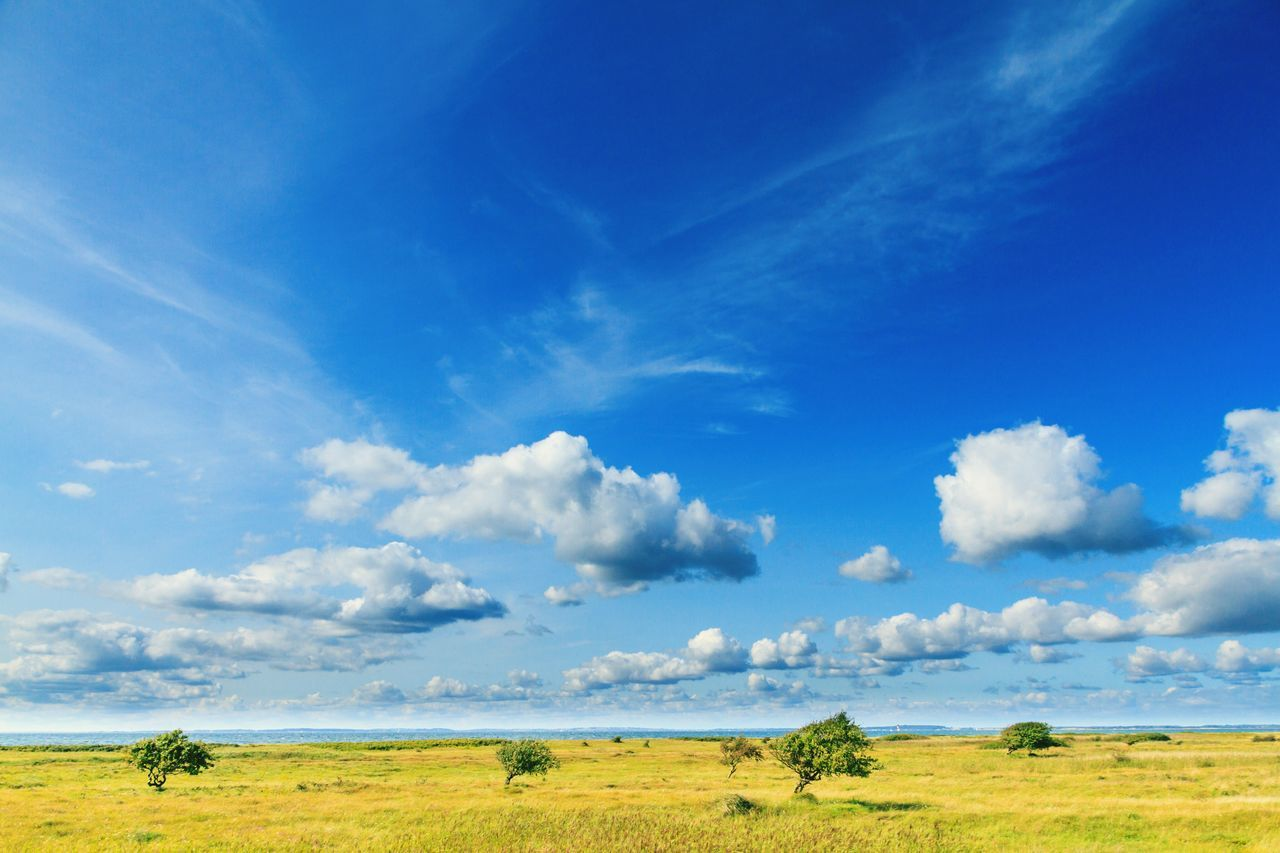 Landscape Nature Beauty In Nature Field Scenics Tranquil Scene Sky Day Cloud - Sky Outdoors Blue Tranquility Grass No People Tree Water Animal Themes Unforgettable Blue Sky Clouds And Sky Cloudporn Blue Tree
