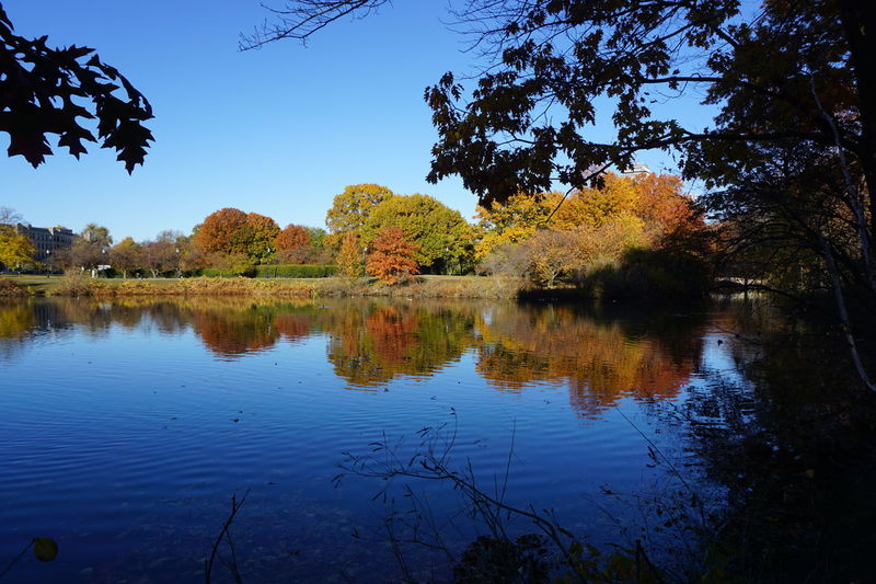 Trees Reflection On Water Outdoor Pictures Trees And Sky Landscape Colorful Trees