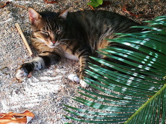 Cat Cat Chill Leaf Shadows & Lights Pets Feline Domestic Cat Close-up EyeEmNewHere