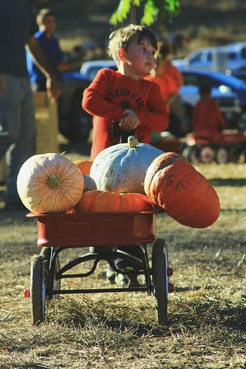 Pumpkinpatch Real People Hands At Work Mendocino County Halloween_Collection Enjoying Life Northern California Boys Childhood Outdoors Pumpkins