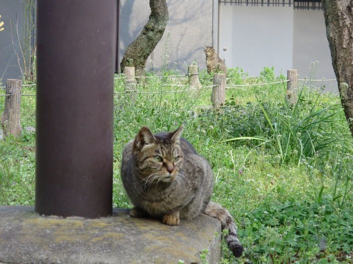 Stray Cat Cat No People Two Cats Cat Photography Cat Lovers Domestic Cat Domestic Animals 野良猫