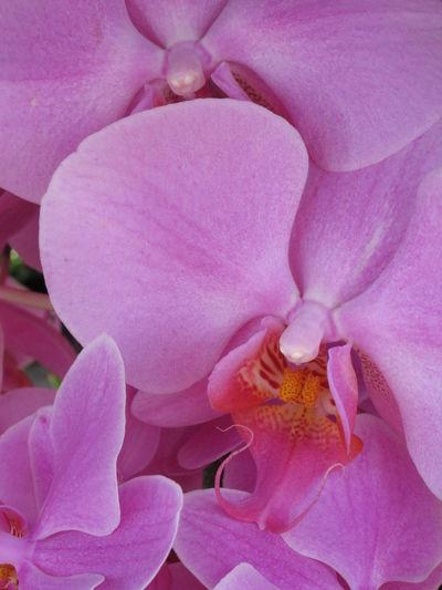 Blooming Elégance Fleurs Flower Flowers Freshness Nature Orchid Orchidee Springtime 春天 花 蘭花 開花