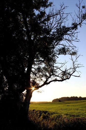Bare Tree Beauty In Nature Branch Day Field Grass Grassy Green Green Color Growth Idyllic Landscape Nature No People Non Urban Scene Non-urban Scene Outdoors Remote Rural Scene Scenics Sky Tranquil Scene Tranquility Tree Tree Trunk