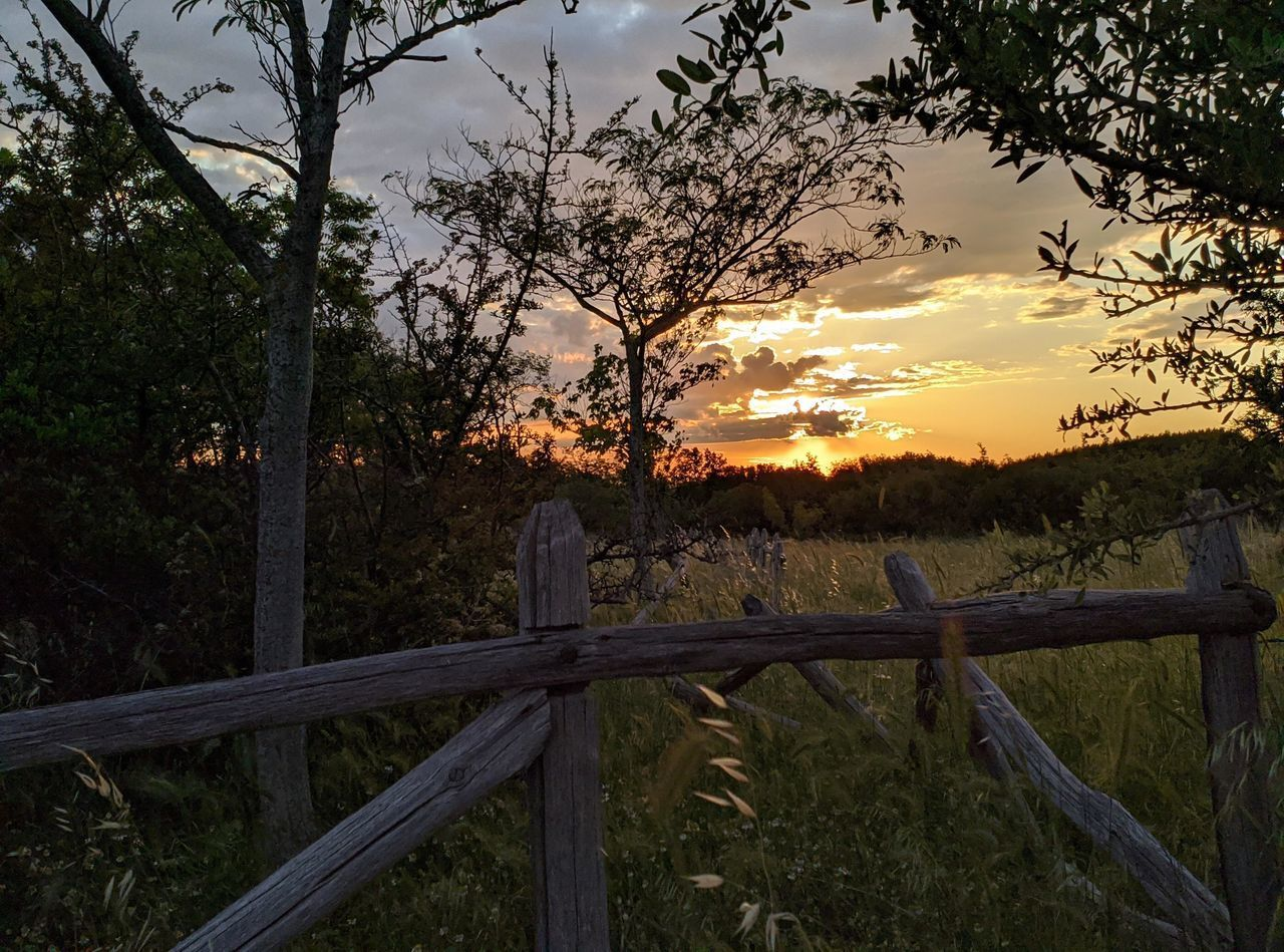 FENCE AND TREES ON FIELD AGAINST SKY AT SUNSET