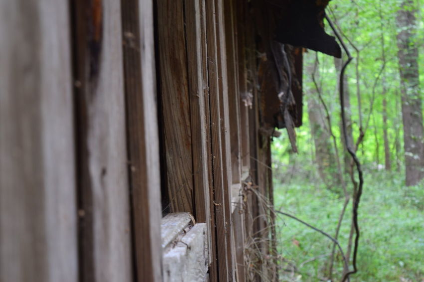 Close-up Nature No People Old Outdoors Wood - Material Rundown Obsolete Bad Condition Cabin In The Woods Lowndes County Alabama Alabama Wildlife Managment Lowndes County Alabama Alabama Outdoors