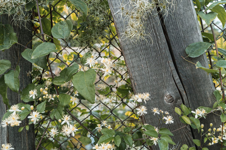 Close-up of flowering plants and trees by fence