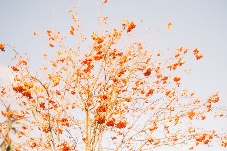 Low angle view of flowering plant against sky during autumn