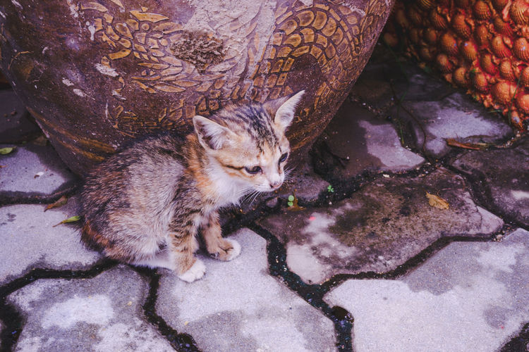 Homeless little kitten, beside the dragon vase. Alone Baby Hungry Kitty Lonely Pathetic!! Poor  Young Abandoned Animal Cat Cute Dirty Homeless Kitten Look Pathetic Sad