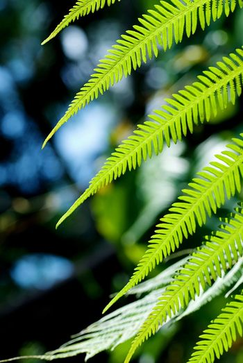 Eye4photography  EyeEm Nature Lover EyeEmNewHere EyeEm Best Shots Green Color Growth Leaf Plant No People Focus On Foreground Nature Close-up Day Outdoors Fern Beauty In Nature Fragility Freshness