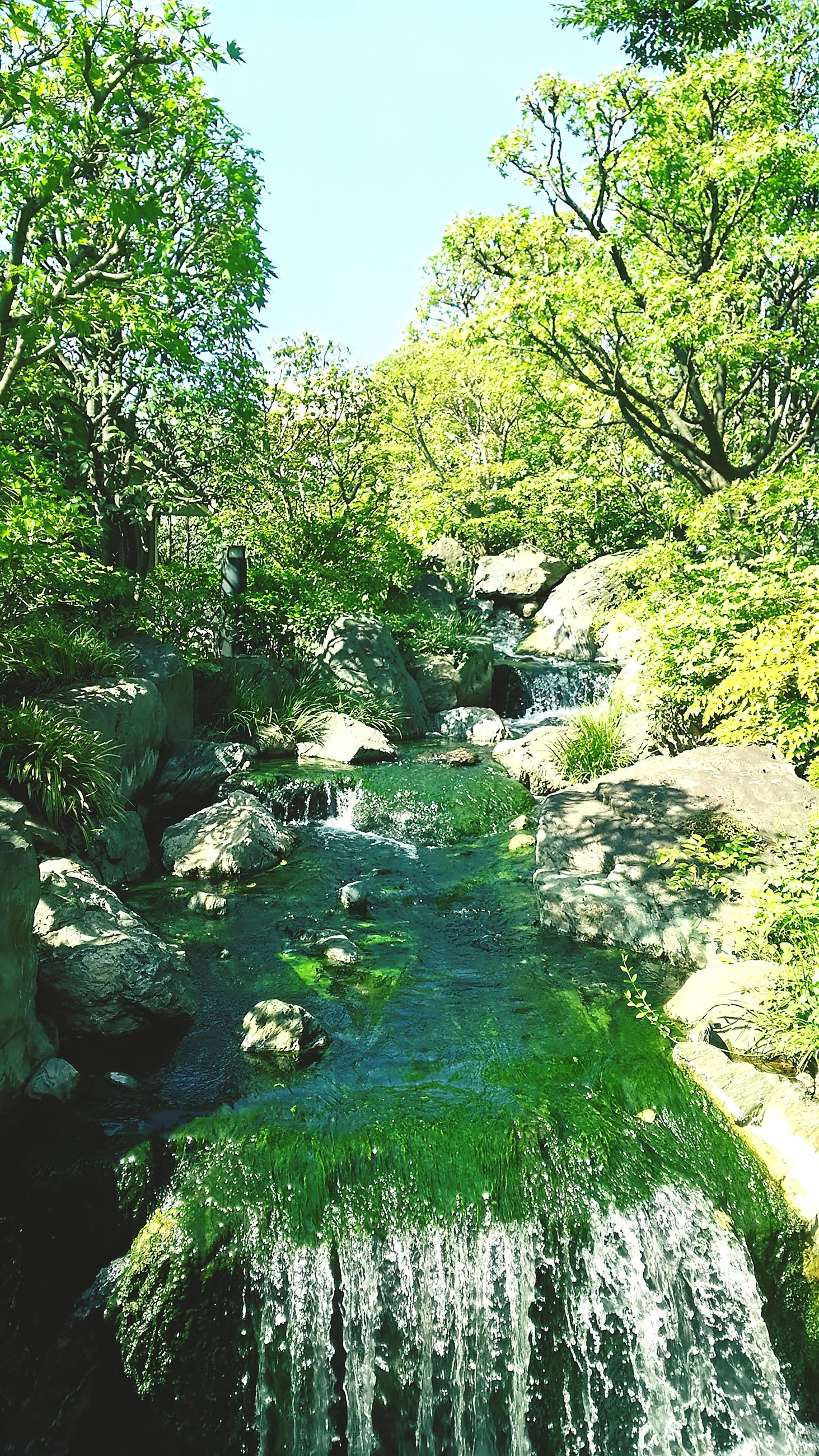 water, tree, tranquility, beauty in nature, growth, nature, green color, tranquil scene, scenics, rock - object, plant, reflection, forest, day, clear sky, idyllic, river, stream, sunlight, outdoors