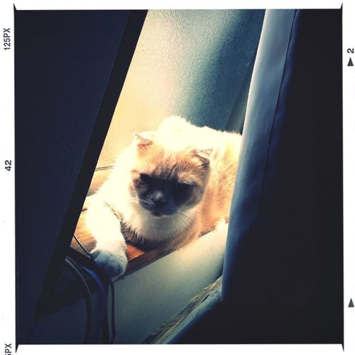 sunbath :3 Cat Cats
