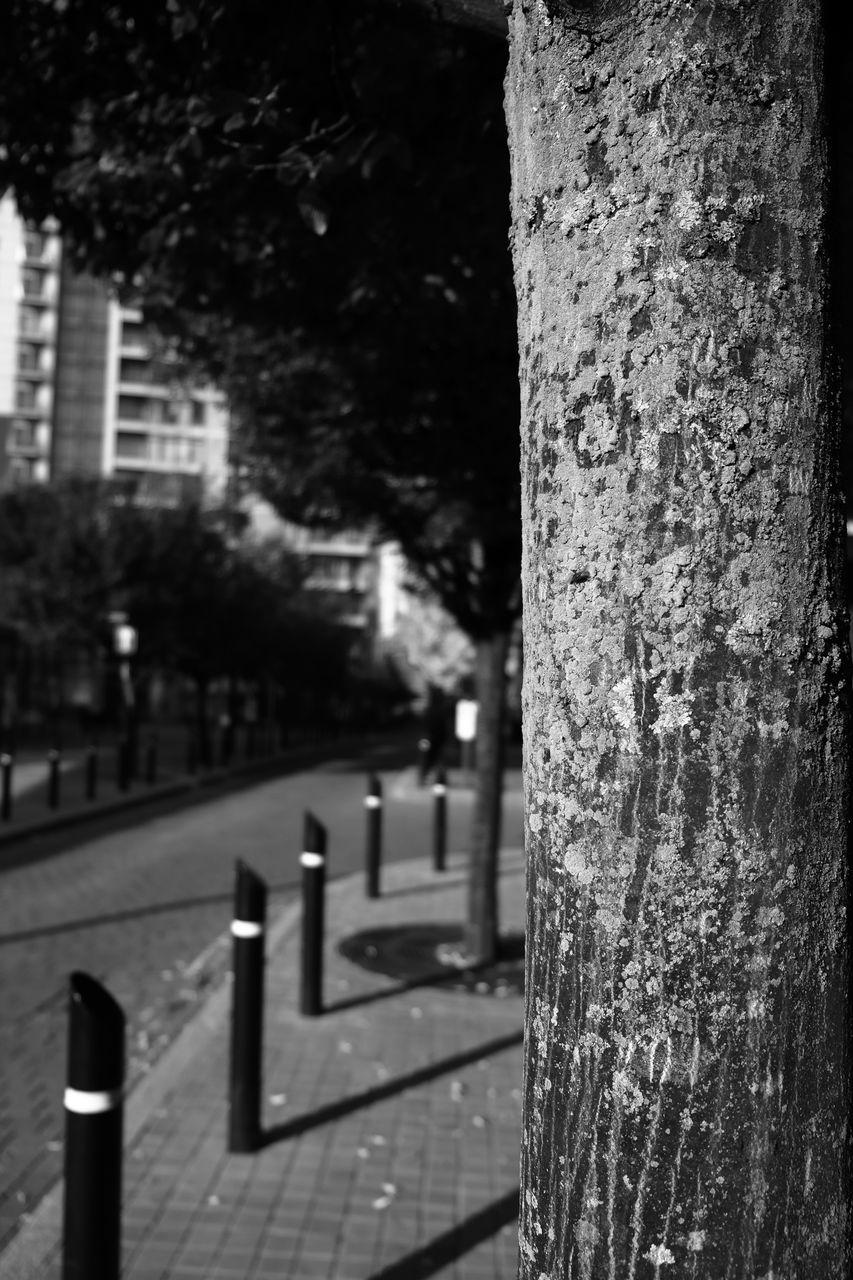 Close-Up Of Tree On Sidewalk