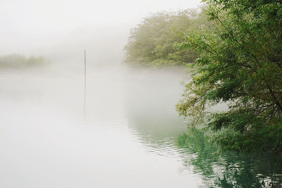 Fog Foggy Tranquility Tranquil Scene Scenics Weather Lake Water Waterfront Tree Beauty In Nature Plant Nature Idyllic Growth Non-urban Scene Calm Mist Reflection Environment at Taishoike Lakeside in Matsumoto Japan Finding New Frontiers Geology Landscape The Great Outdoors - 2017 EyeEm Awards