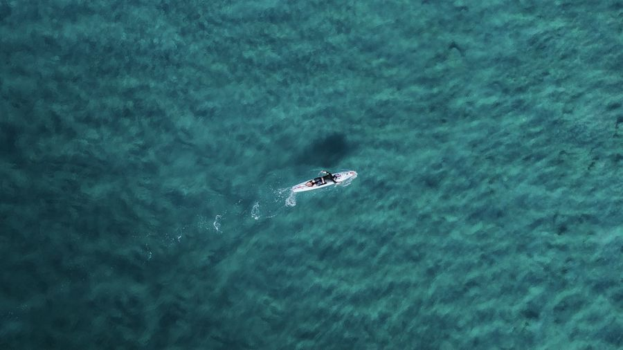 High angle view of whale swimming in sea