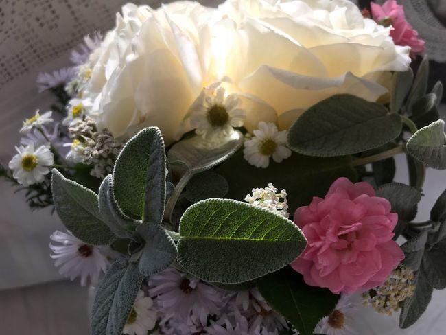 Mein Garten Selfmade Salbei Weiße Rosen 🌾 EyeEm Nature Lover Herbst18⭐️ Flowerporn Picoftheday Nature_collection Blumenstrauß