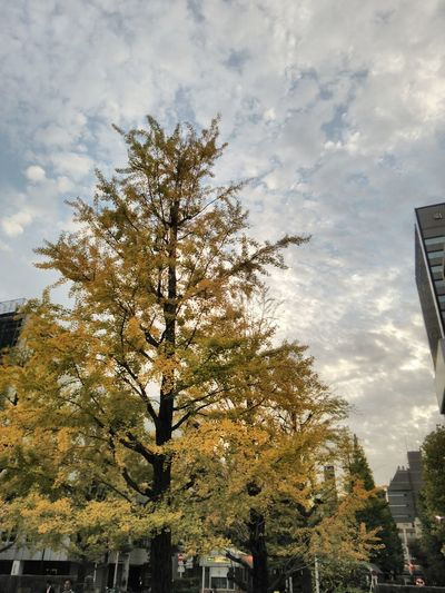 20161031 Yellow Leaves Sky Fall Fall Collection Fall Beauty Autumn Autumn Colors Autumn Leaves Autumn🍁🍁🍁 Autumn Collection Park Autumn 2016 Sky And Clouds Sky And Trees Tree And Sky Tree Tree_collection  Treelovers 秋 秋空 紅葉