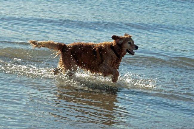 Water Splashing One Animal Animal Themes Mammal Nature Outdoors Day Sea No People Dog