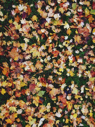 Autumn Colors Taking Photos Photography Radev_photography
