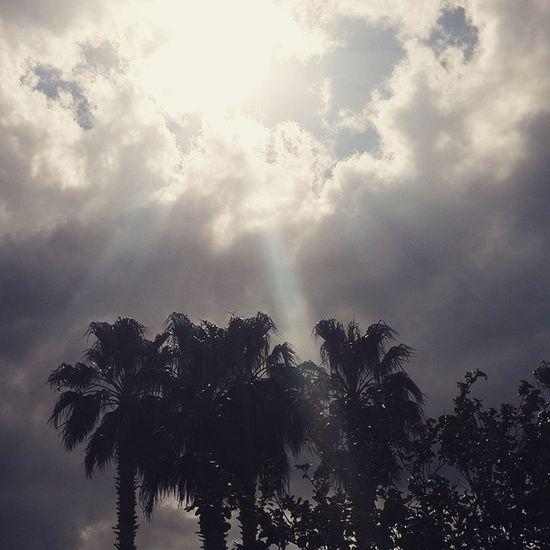 Manzara Mart Palmiye Bulut akdeniz