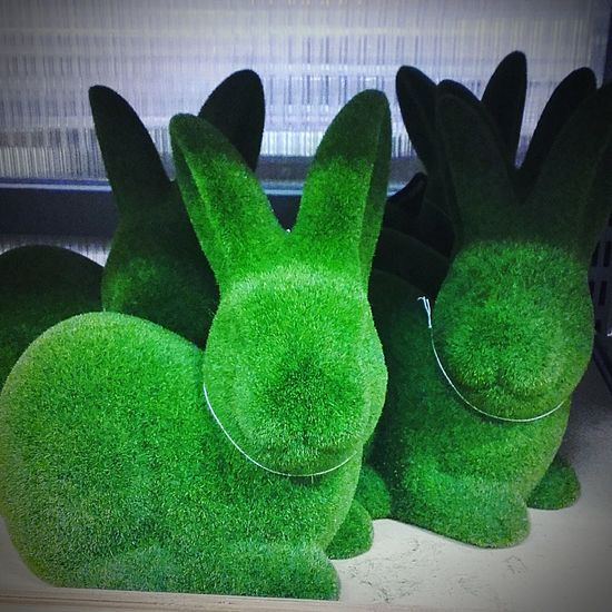 Green Rabbits Green Rabbit Greenrabbits Greenrabbit Green Color Green Green Colour Greencolor Rabbits Greencolour Rabbits 🐇 Rabbit Rabbit 🐇 Bunny 🐰 Bunnies Bunny  Rabbit ❤️ Rabbit♡ Green Bunnies Green Bunny Bunny Rabbit Wabbit Bunny Rabbits Check This Out Animal Representation