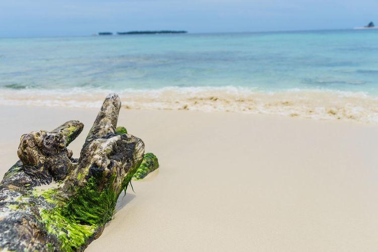 Driftwood at beach