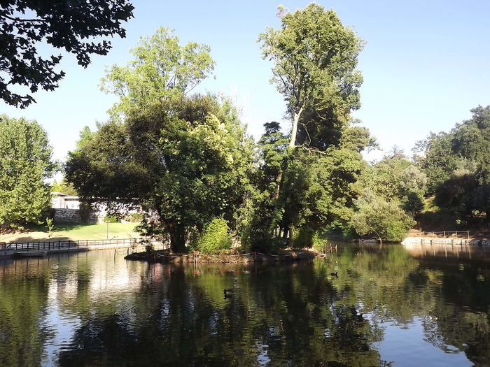 Beauty In Nature Calm Day Green Green Color Lake Majestic Nature Non-urban Scene Reflection Scenics Tall - High Tranquil Scene Tranquility Tree Water Waterfront Luso Portugal No Filter, No Edit, Just Photography