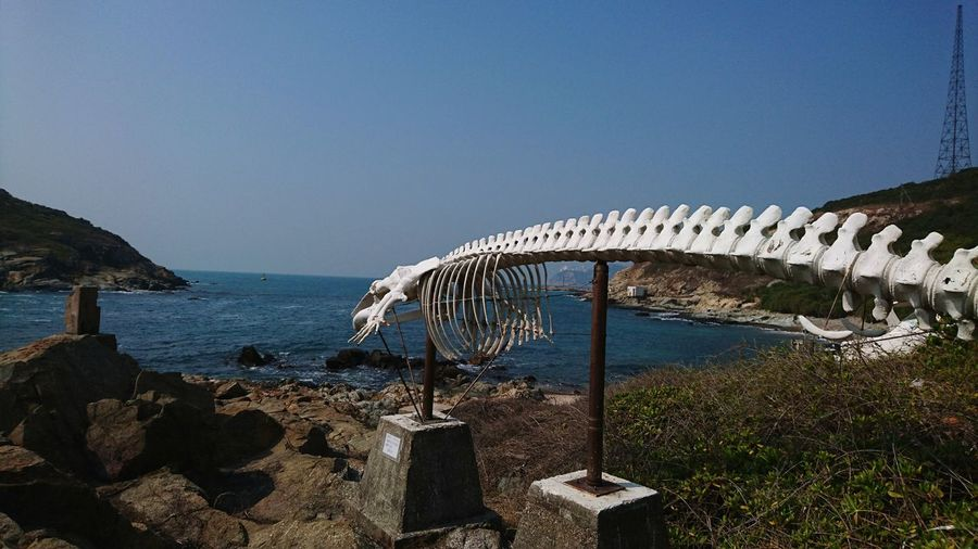 Sea Scenics Water Sky Outdoors Nature No People Day Whale Beauty In Nature Hong Kong Cape D'aguilar Nature Beach