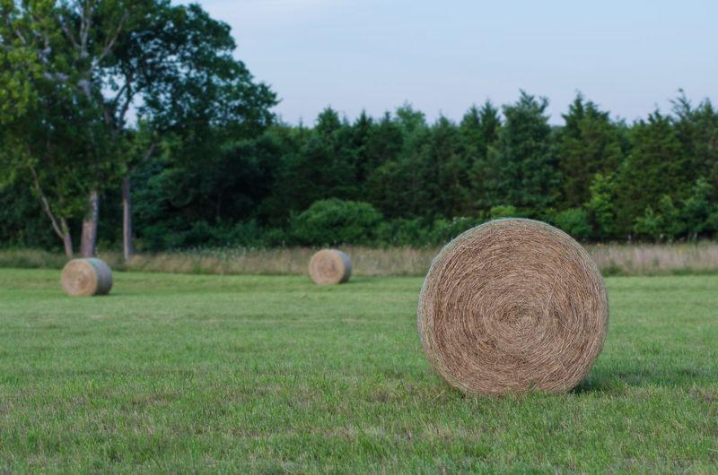 Large round hay