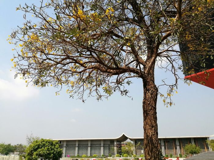 Low angle view of flowering tree by building against sky