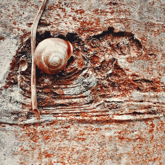 In the moment, this is the way of the snail Snail Snails Snailshell Treetrunk Red Nature Nature Photography Molusc Nationaltrust Outdoors