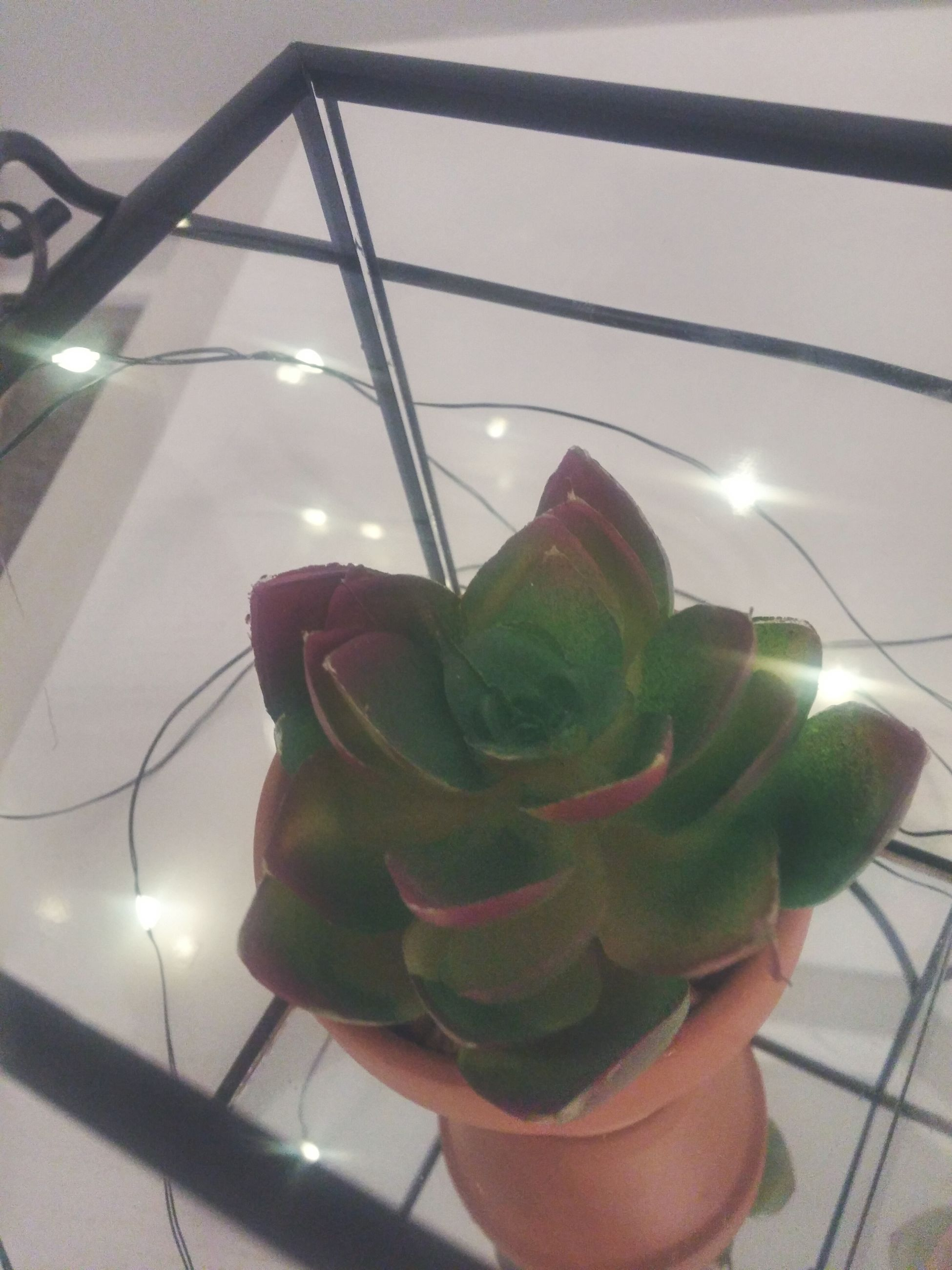 growth, flower, close-up, indoors, nature, freshness, fragility, no people, illuminated, beauty in nature, night, flower head