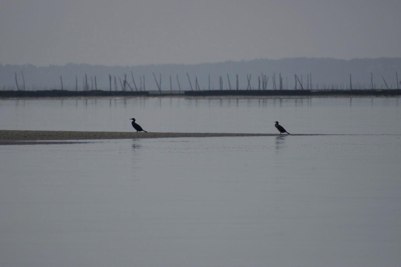 Birds Amidst Sea Against Sky