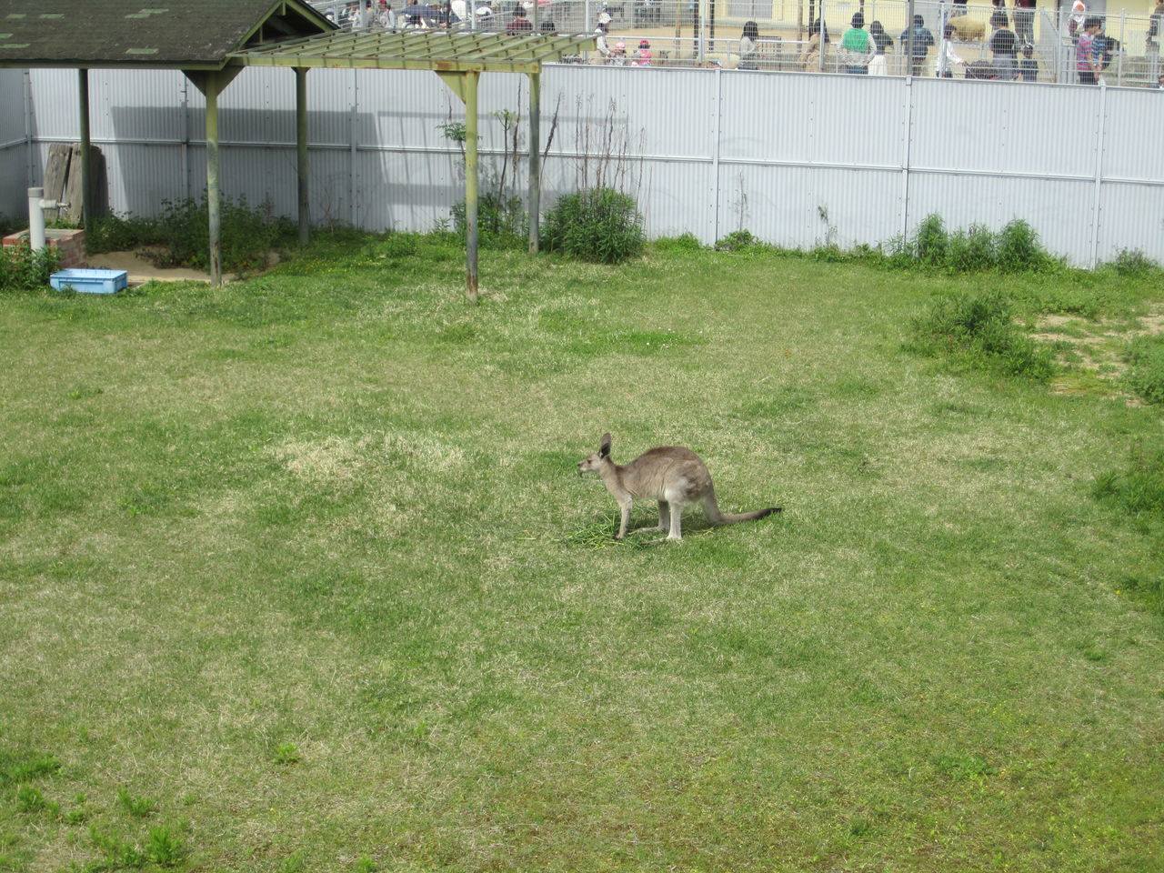 grass, mammal, animal themes, nature, one animal, no people, day, young animal, outdoors, dog, domestic animals