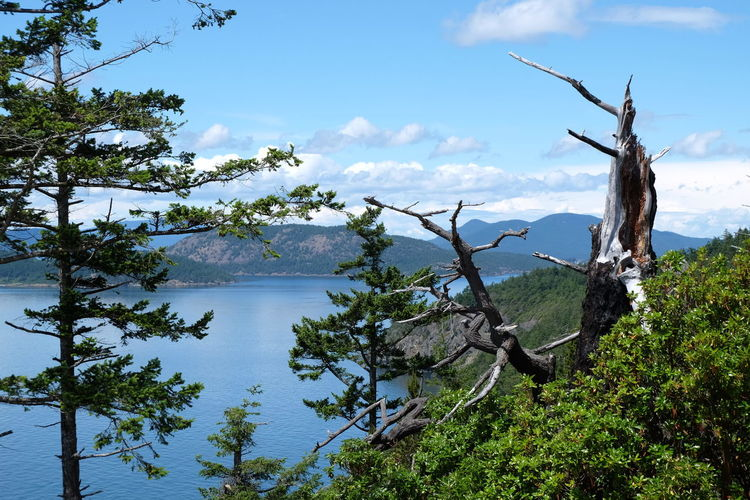 Pacific Northwest  Strait Of Juan De Fuca Beauty In Nature Branch Cloud - Sky Day Growth Land Mountain Nature No People Non-urban Scene Outdoors Pacific Ocean Plant San Juan Islands Scenics - Nature Sea Sky Tranquil Scene Tranquility Tree Water