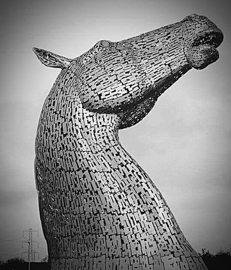 The Kelpies Horse Water Horse Statue Black & White