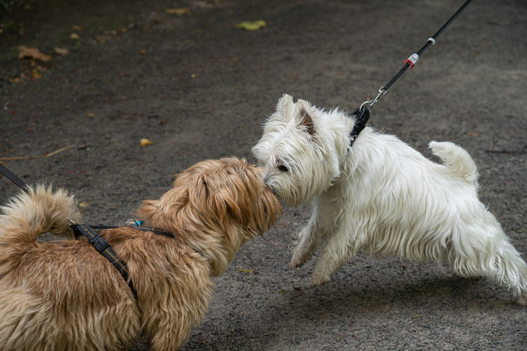Two dogs sniff