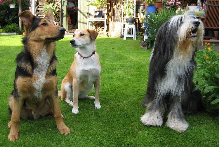 Lissy, Elvis und Buddy warten auf ein Leckerli Freunde ♥ Dogfriends Dogslife Dogs Of EyeEm Hundefreundschaft Animal Photography Animals Posing