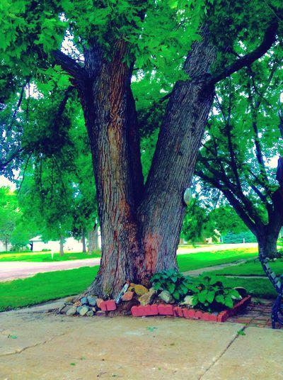 Old Tree Hidden Gems  Nebraska Outside Plants July Showcase