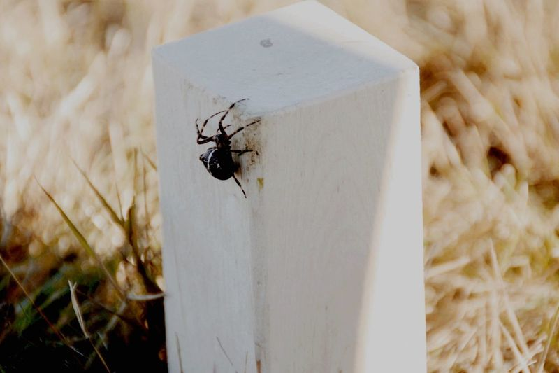 Spider Kubb Winterberg Taking Photos Vacation Germany