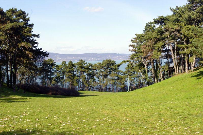 Balaton Beauty In Nature Grass Hungary Lake Landscape Nature Outdoors Pine Tranquil Scene Tranquility Tree