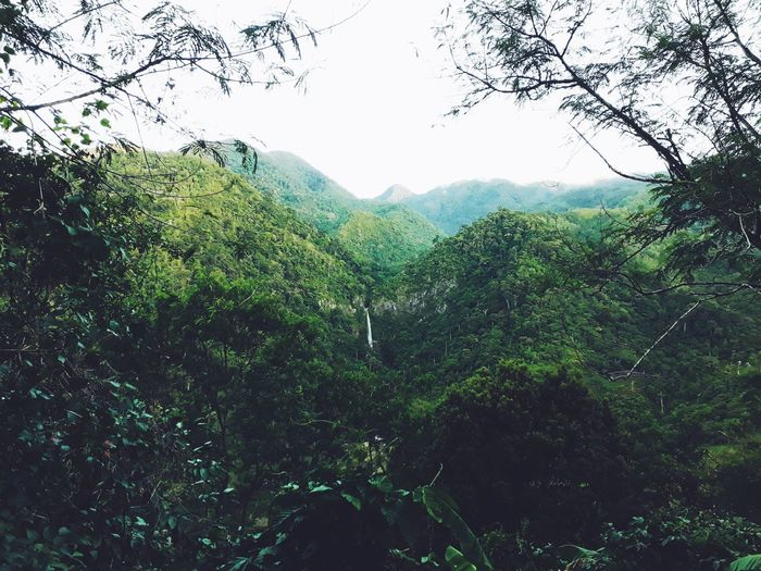 Green Land Jungle Life Solitude 2nd Eyeem Photo Tree Forest Mountain Backgrounds Sky Green Color Close-up